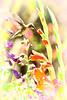 Hummingbird With Gladiolas,  pastel vignette