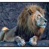Lion LPZ