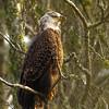 Eagle with Attitude