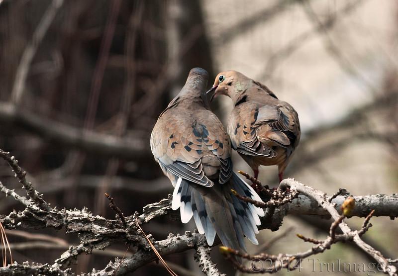 Mr & Mrs Dove