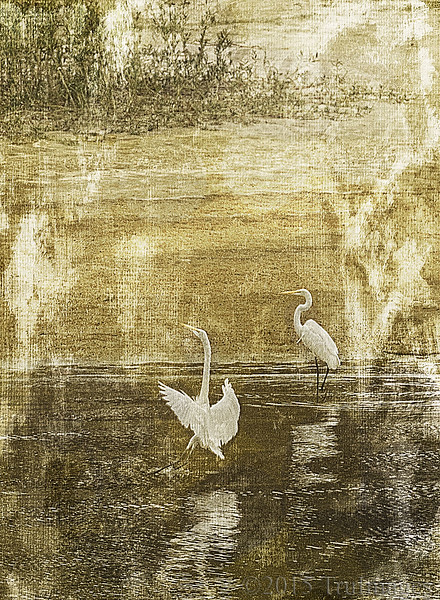 Egret Impressions