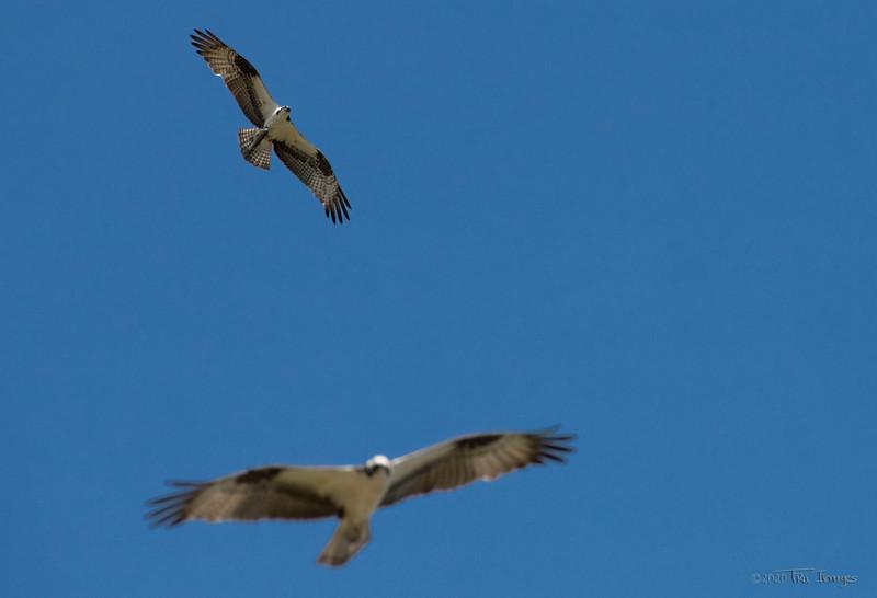 Birds of Prey -by TruImages