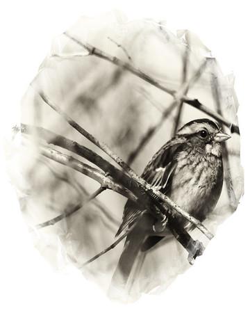 Portrait of a Little Bird