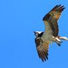 UFB (Unidentified Flying Bird!)