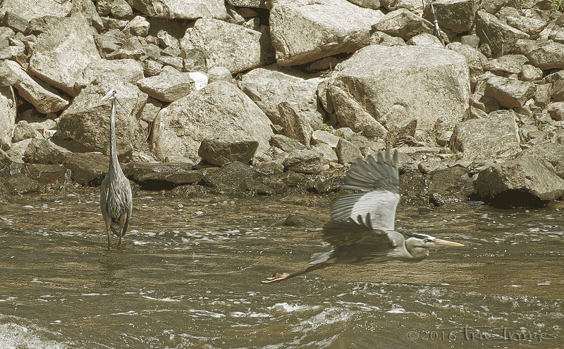 Heron & Heron