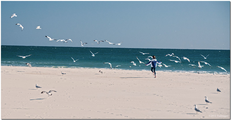 Jan 22<br /> Frolicking with the seagulls