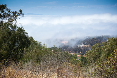 Mom's neighborhood is still under the marine layer.  She refused to listen to me when I warned her how much warmer it would be on the hill.  It is at least 10 degrees warmer when there is no shade.