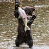 HIGH FIVE!  CUB WITH CATCH OF THE DAY