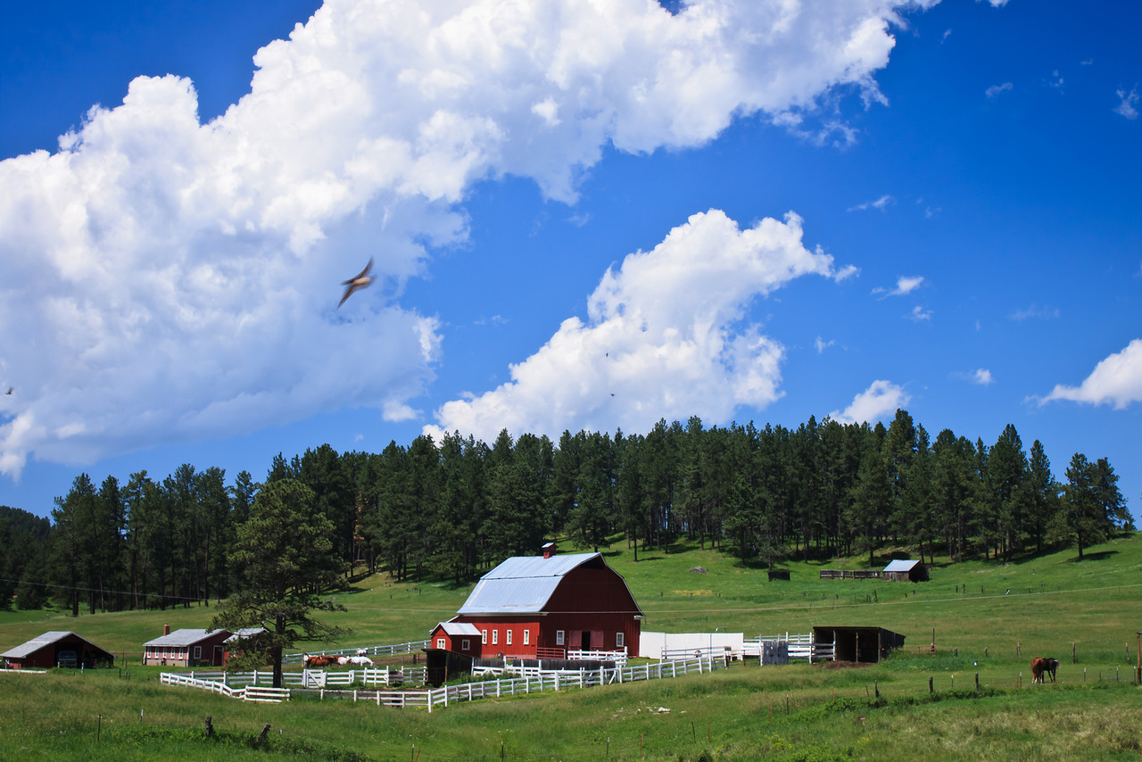 Red Barn in the Black Hills
