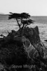 Lone Cypress - 17 Mile Drive #7771 B & W