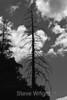 Trees - Yosemite (35)-2