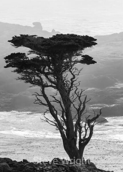 Cypress Trees - Point Lobos #6380-2