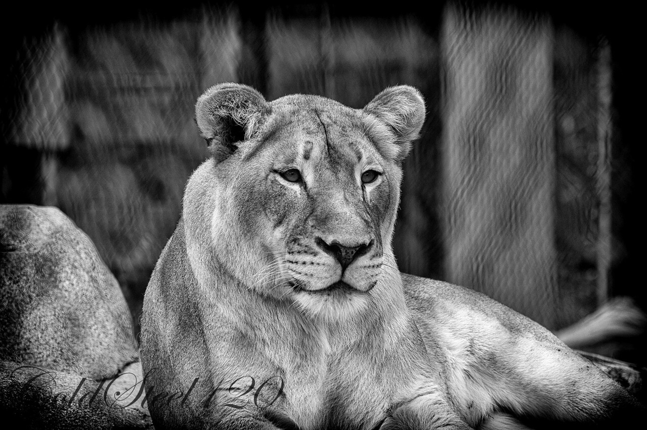 This picture was captured at the San Diego Zoo.