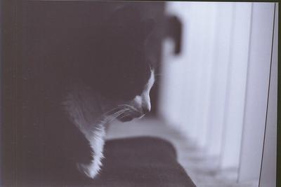 Nikon_F_BW1_0014