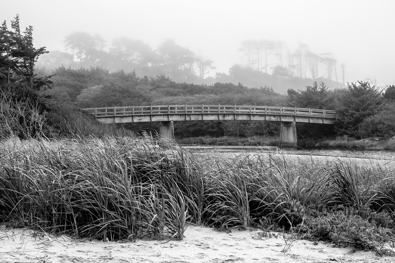 Foggy Ona Beach State Park, Black & White