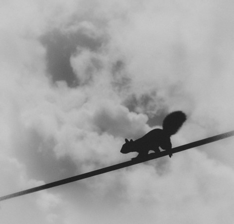 Squirrel on a tightrope
