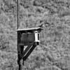 B/W Birdhouse