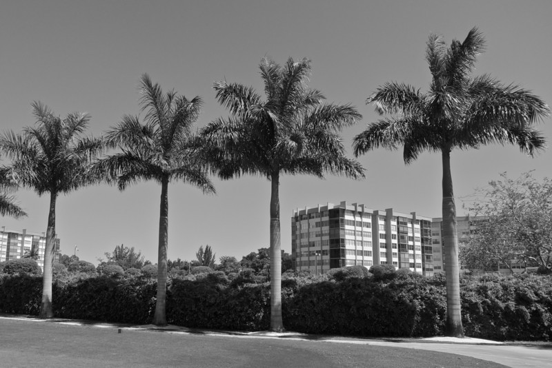 Miami Calm