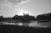 B&W rendition of Sunset Over The Wetlands