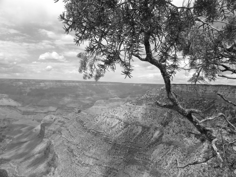 Canyon shades (photo taken in B&W)