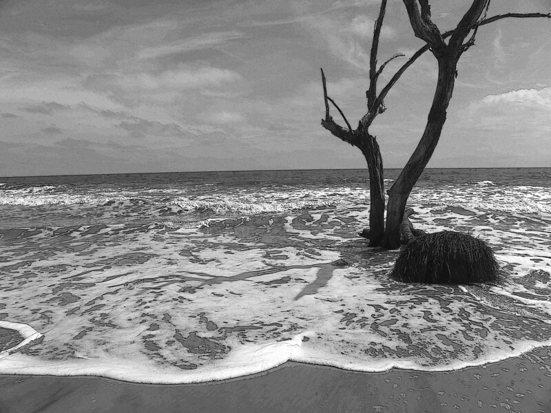 Beached Tree, B&W
