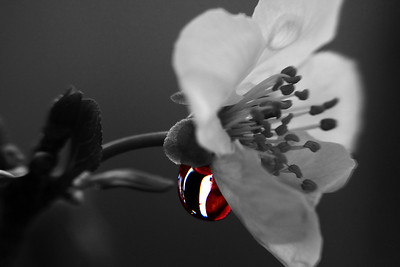 AndolinaPhotography0040(BW)