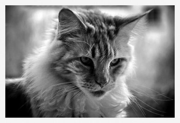 Cats / Katter in B&W