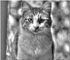 Aug 31 <br /> The monochromatic kitty stare!