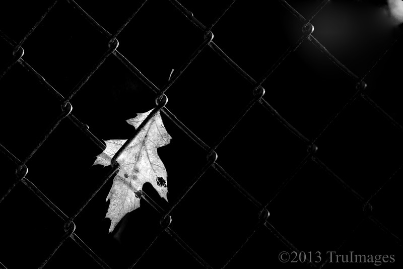 Aug 9<br /> The leaf<br /> <br /> We were walking through a park when I saw this single leaf hanging onto a fence backlit by the evening sun. I decided to go B&W for an abstract appeal.<br /> <br /> Thanks for viewing and commenting! Happy Friday everyone!