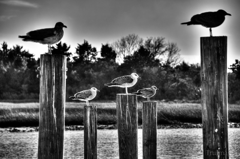 Mar 3<br /> 5 Statues<br /> <br /> These guys caught my eye as we were leaving the pier. They looked like statues on pedestals!<br /> <br /> Thanks for your wonderful comments on yesterdays photo!
