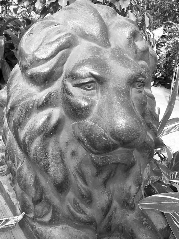 Bronze lion at the plant nursery (it looks like bronze anyway).
