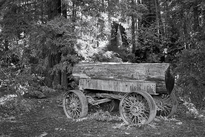 Old logging wagon in the Redwood forest of northern California.  Nikon D-300, Nikkor 18-105mm lens, f-4 @ 1/20sec