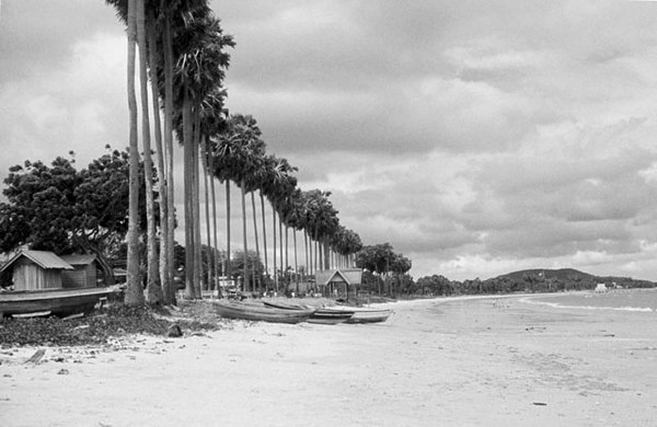 Palms along the beach - Gulf of Siam