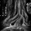 Roots<br /> Cartagena Spain