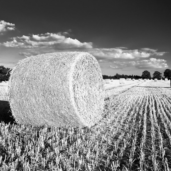 Harvest, West Sussex