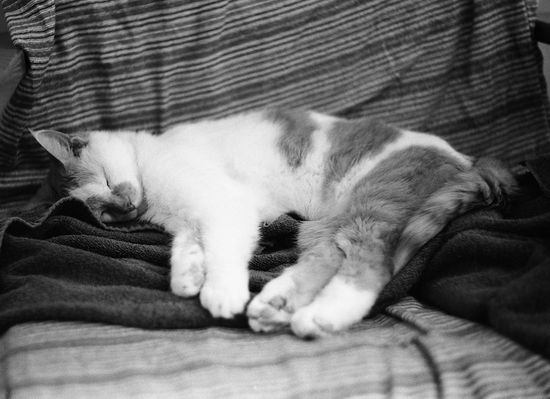 My cat Spike doing what she is best at - sleeping.<br /> <br /> Leica M5 loaded with Kodak Double X developed in HC-110 for 6 minutes at 19C.