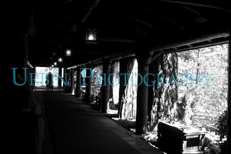 The walkway from the road to the Ahwanhee Hotel lobby in glorious Black and White.