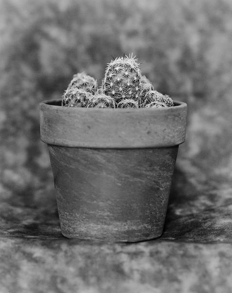 4x5 Cactus