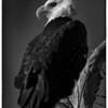 Union Reservoir Eagles<br /> Longmont, Colorado
