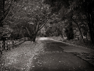 Woodside Lane on damp fall day.