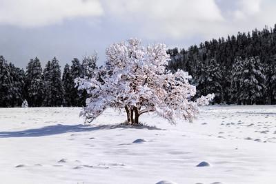 Lone Tree Black and White