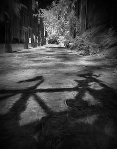 Shadow of Bike on Amsterdam Street