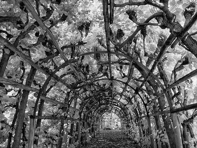 Potsdam Arbor IR