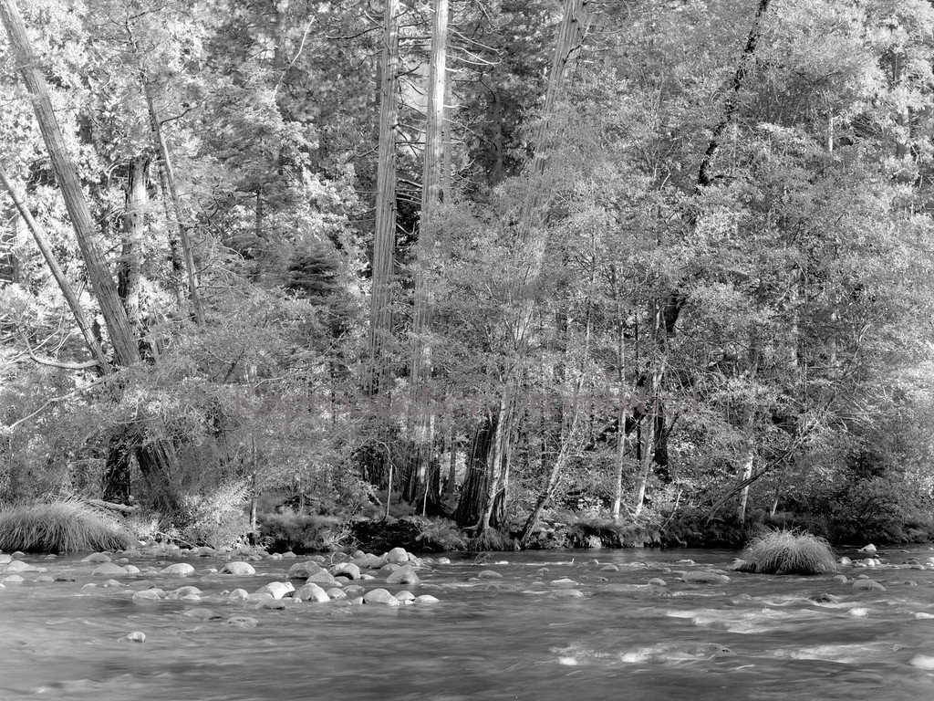 Mercy River Yosemite National Park, CA.