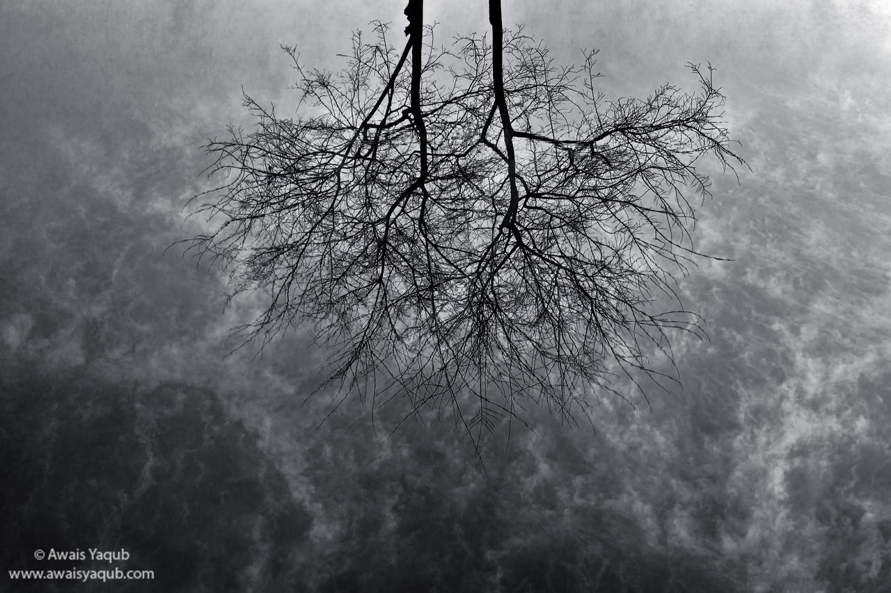 Tree reflection in water and mist.   Click buy Print for prints option, or contact for further information or help. This image is suitable for large prints as water ripple effect on tree branches is very clear in large size. Order fine art prints online, ships from America to  whole world. Click yellow buy button