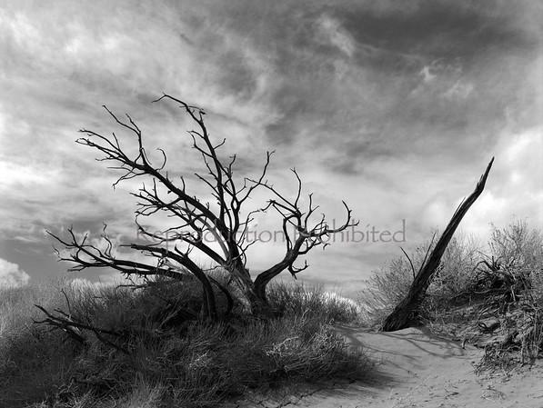 Forlorn Southern Utah