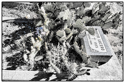 Cemetery at Albuquerque, New Mexico