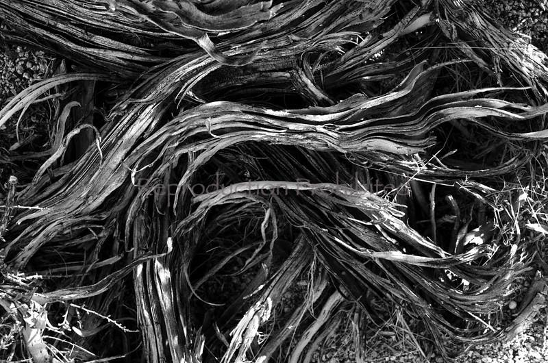 Shredded Eastern Sierra, California December 2012