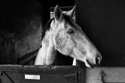 Horse in his stall.