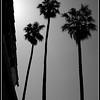 Taken in Palm Springs, Ca.